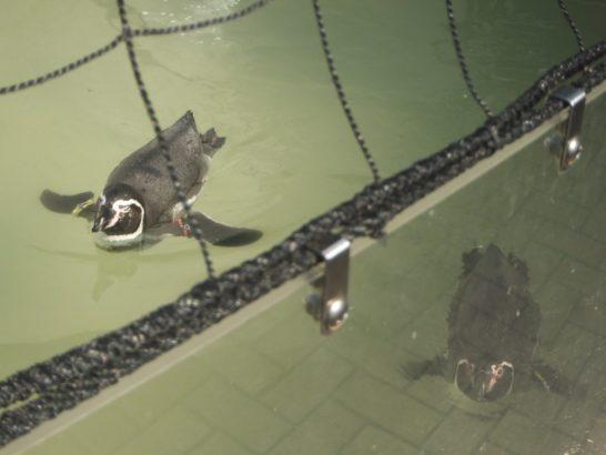 井の頭公園の自然文化園 ペンギン