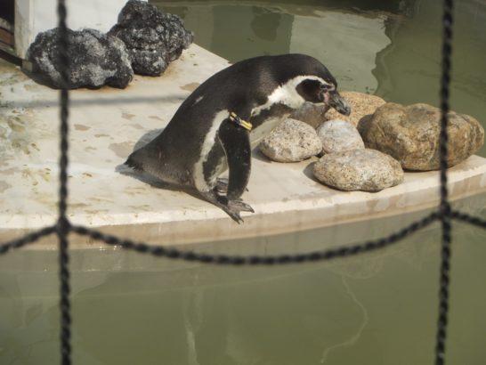 井の頭公園の自然文化園、ペンギン、リス、ヤクシカ、アライグマ