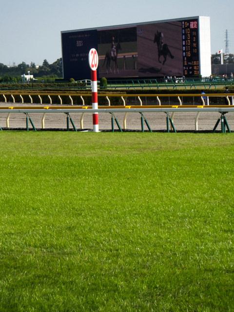 パイロ産駒、カゼニモマケズ。東京競馬場、ダート1300m。前走、落馬の影響で、スタート後手綱引く不利な特徴。それでも追い込んでの6着