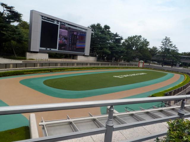 東京競馬場・20140824・パドック左側から・画像写真