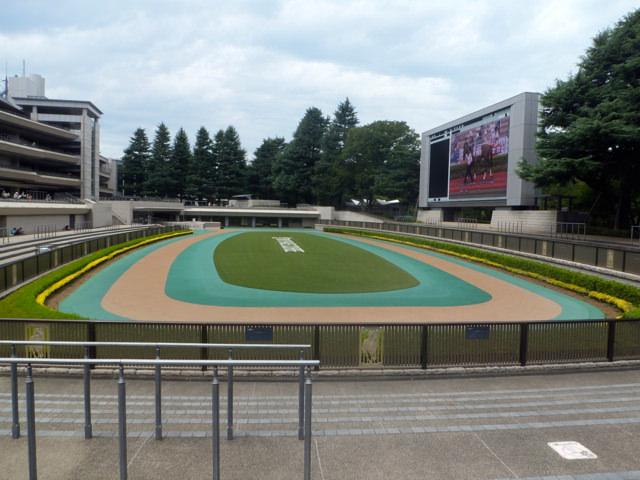 東京競馬場・20140824・パドック右横から