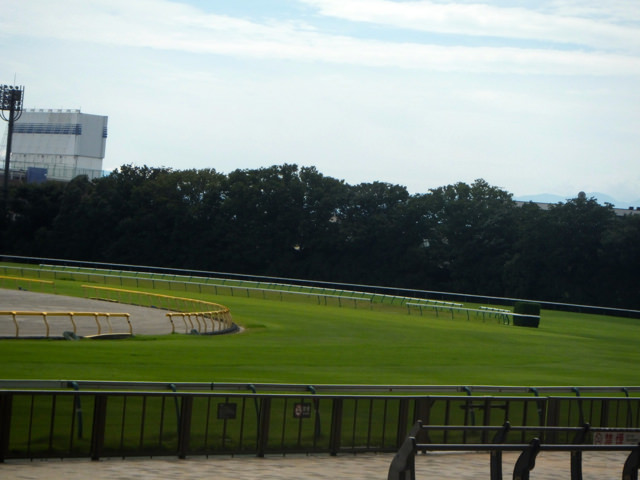 競馬予想。前走スタート後、挟まれる不利。直線伸びる特徴。シニスターミニスター産駒、モンサンアルビレオ。新潟競馬場、ダート1800m