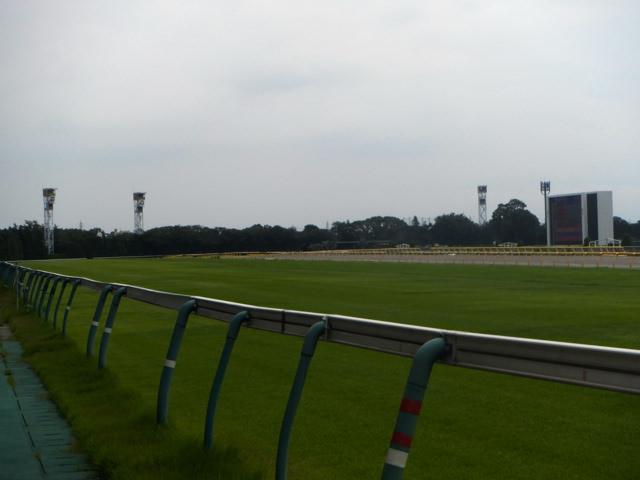 東京競馬場・20140824・芝コース遠くに4コーナー直線・画像写真