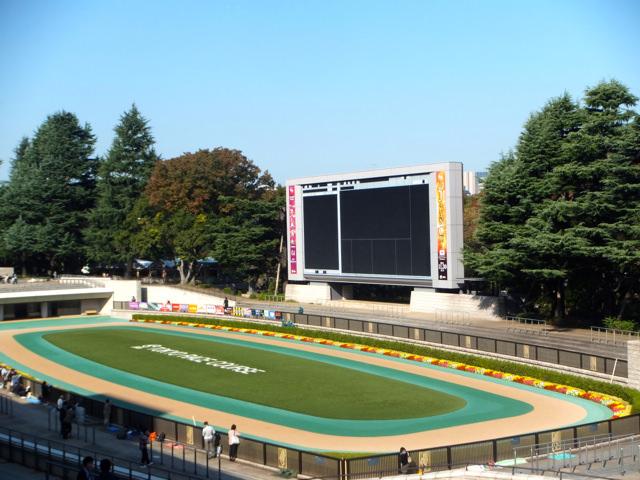 東京競馬場・20141024・パドックと大型ビジョン
