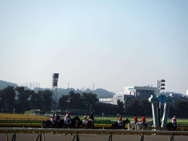 東京競馬場・20141024・ダートコース返し馬・画像写真