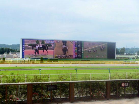 ダイワメジャー産駒ボブキャット、福島競馬場(芝1200m)1着