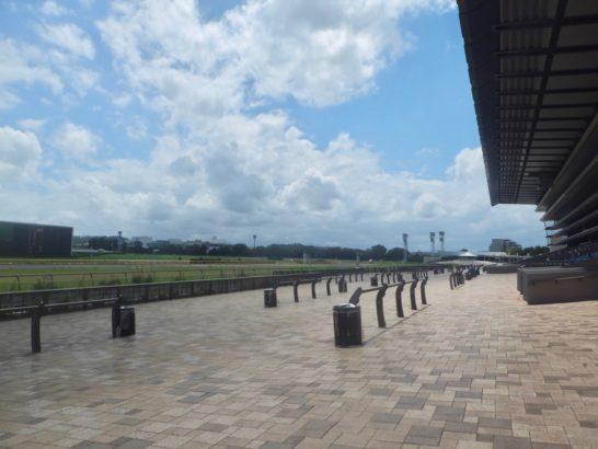 ダイワメジャー産駒ボブキャット、今回の走り、1着(福島競馬場芝1200m)