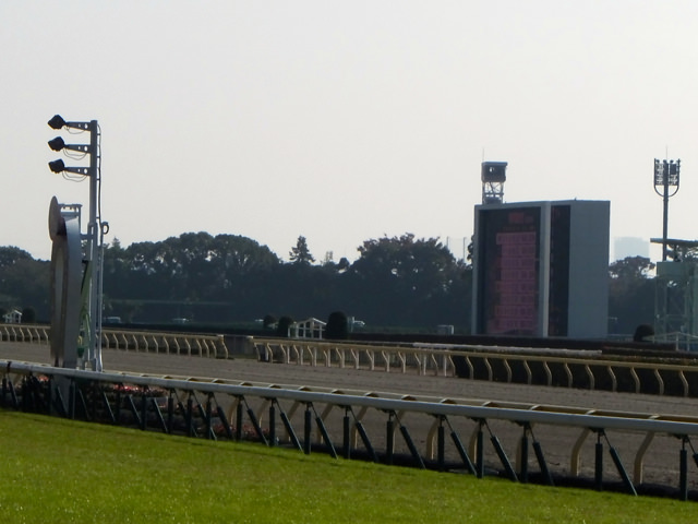 東京競馬場・2014年10月25日・ダートコース、ゴール板付近