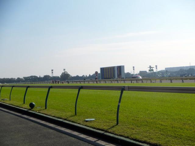 東京競馬場・2014年10月25日・直線芝コース