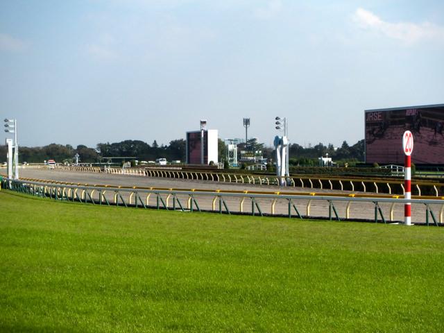 福島記念2019競馬予想に。過去の結果から1〜3着馬の前走データをレース映像分析【傾向・追い切り・オッズ】