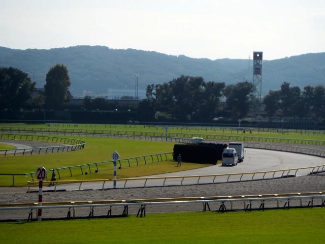 デイリー杯2歳ステークス2019競馬予想に。過去の結果から1〜3着馬の前走データをレース映像分析【傾向・追い切り・オッズ】