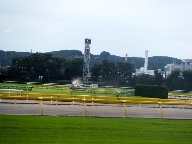 フローラステークス2020競馬予想に。過去の結果から1〜3着馬の前走データをレース映像分析【傾向・追い切り・オッズ】