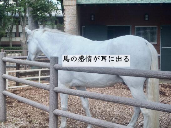 馬の感情が耳に出る