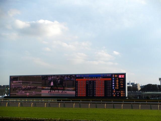 スワンステークス2019競馬予想に。過去の結果から1〜3着馬の前走データをレース映像分析【傾向・追い切り・オッズ】