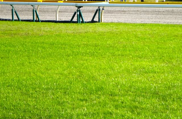 秋華賞2019競馬予想に。過去の結果から1〜3着馬の前走データをレース映像分析【傾向・追い切り・オッズ】