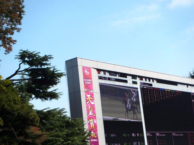 サウジアラビアロイヤルカップ2019競馬予想に。過去の結果から1〜3着馬の前走データをレース映像分析【傾向・追い切り・オッズ】