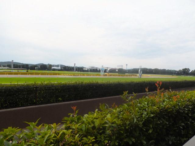 安田記念2020競馬予想に。過去の結果から1〜3着馬の前走データをレース映像分析【傾向・追い切り・オッズ】