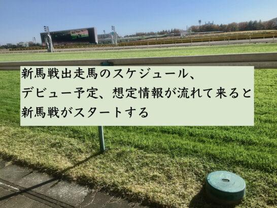 新馬戦出走馬のスケジュール、デビュー予定、想定情報が流れて来ると新馬戦がスタートする