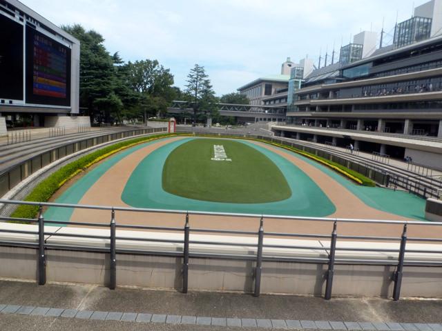 小倉2歳ステークス2019競馬予想に。過去の結果から1〜3着馬の前走データをレース映像分析【傾向・追い切り・オッズ】