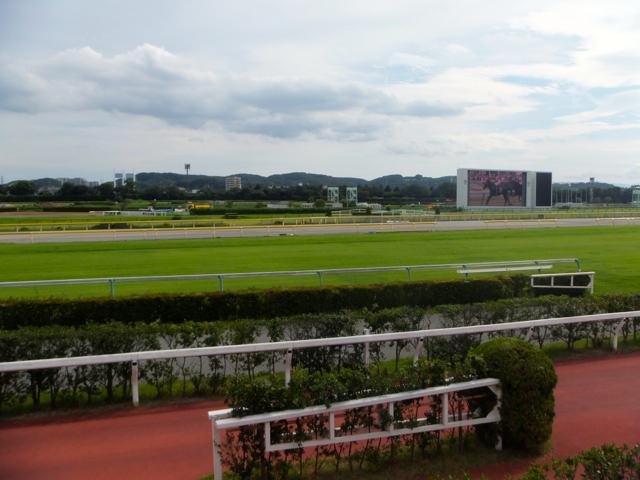 アイルハヴアナザー産駒の種牡馬成績は、特徴としてダート走る血統傾向になると予想してたら芝の競馬でも走ってびっくり