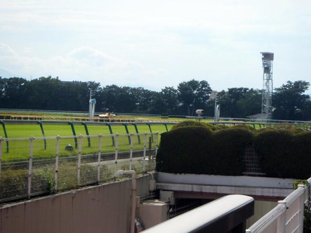 キーンランドカップ2019競馬予想に。過去の結果から1〜3着馬の前走データをレース映像分析【傾向・追い切り・オッズ】