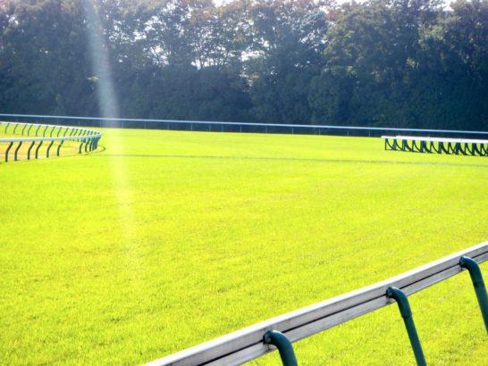 馬場状態は、競馬の有利不利を生む。雨降って、稍重・重馬場・不良馬場と湿るのは簡単2