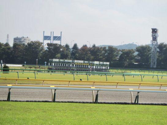 園田競馬の厩務員、田村正一さんの連載漫画『うまのしごと』がスタート。地方競馬予想の参考に。サラブレッドと暮らしています、もおすすめ