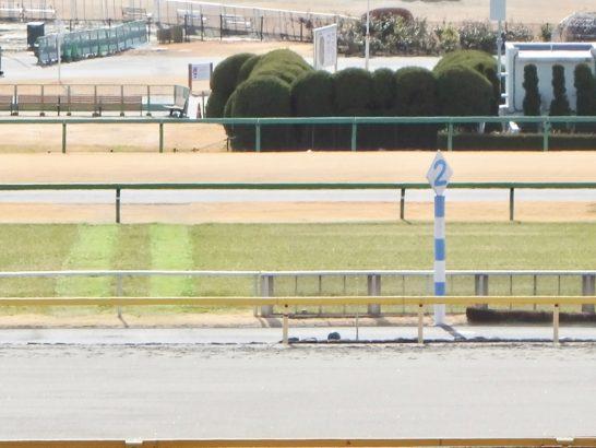 ところが芝もそこそこの複勝圏成績なのですよ、アイルハヴアナザー産駒3