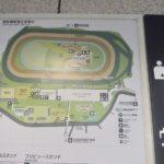 チューリップ賞2020競馬予想に。過去の結果から1〜3着馬の前走データをレース映像分析【傾向・追い切り・オッズ】