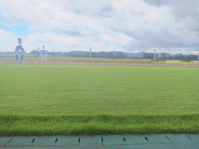 平安ステークス2020競馬予想に。過去の結果から1〜3着馬の前走データをレース映像分析【傾向・追い切り・オッズ】