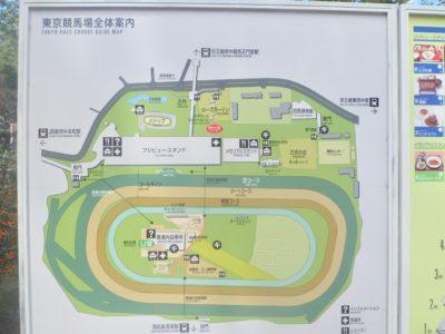 桜花賞2020競馬予想に。過去の結果から1〜3着馬の前走データをレース映像分析【傾向・追い切り・オッズ】