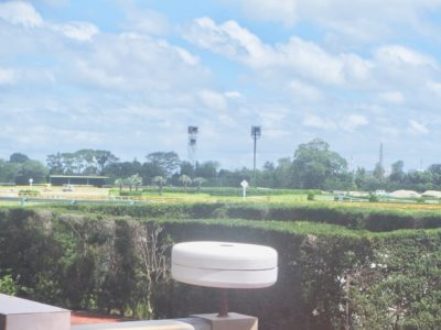 阪神牝馬ステークス2020競馬予想に。過去の結果から1〜3着馬の前走データをレース映像分析【傾向・追い切り・オッズ】