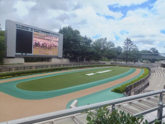 京都2歳ステークス2017・2着・タイムフライヤー【過去データ】(オッズ・1番人気。血統・ハーツクライ産駒)