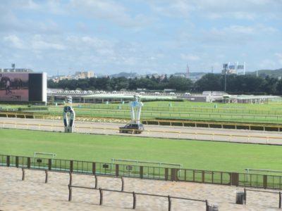 京都金杯2020競馬予想に。過去の結果から1〜3着馬の前走データをレース映像分析【傾向・追い切り・オッズ】