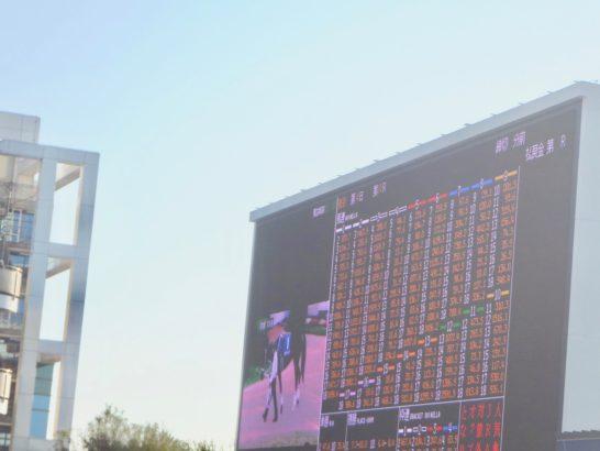 ステイヤーズステークス2016・2着・ファタモルガーナ【過去データ競馬予想】(オッズ・3番人気)