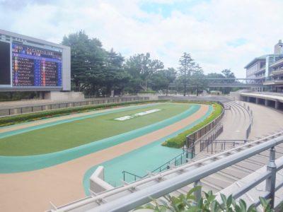 京成杯2020競馬予想に。過去の結果から1〜3着馬の前走データをレース映像分析【傾向・追い切り・オッズ】