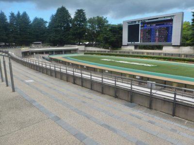 競馬予想・2020.5.23【東京競馬場・京都競馬場・新潟競馬場】